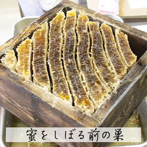 日本蜜蜂(ニホンミツバチ) 幻のはちみつ 600g (国産)