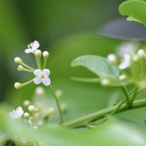 初夏の里山蜜 150g (国産はちみつ)
