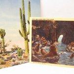 未使用  ポストカード 絵葉書2枚セット Sea Lion & サボテン 1940~50年代