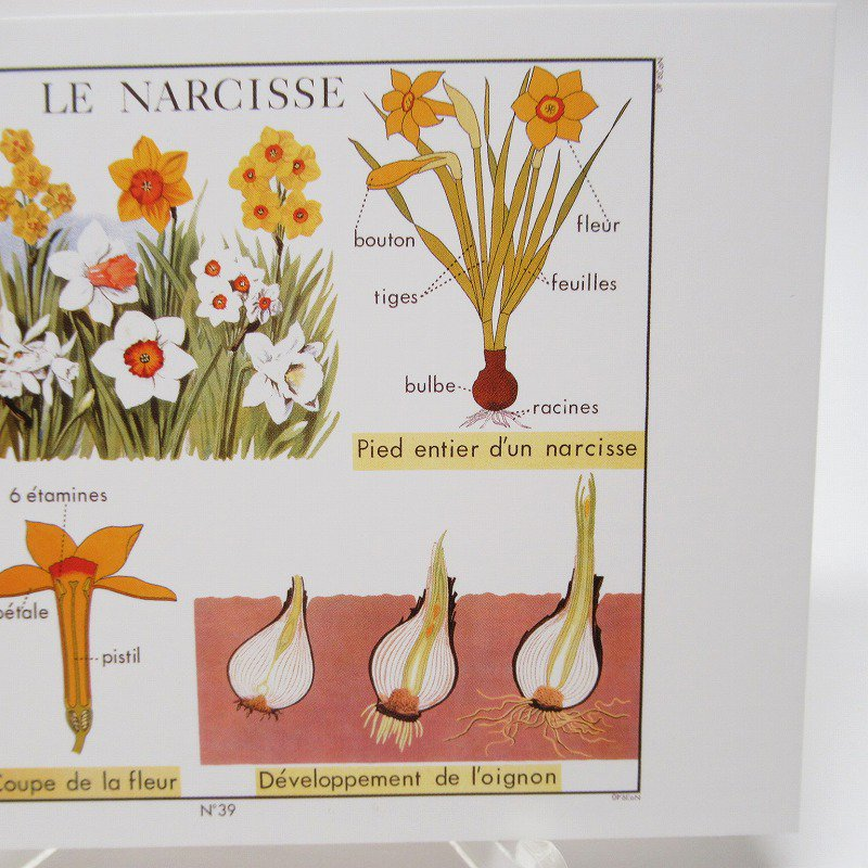 ヴィンテージポストカード 1954年復刻版 Narcissus 未使用【画像3】