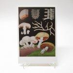 未使用  ヴィンテージポストカード 1950s~1960s年復刻版 Edible Mushroom 未使用
