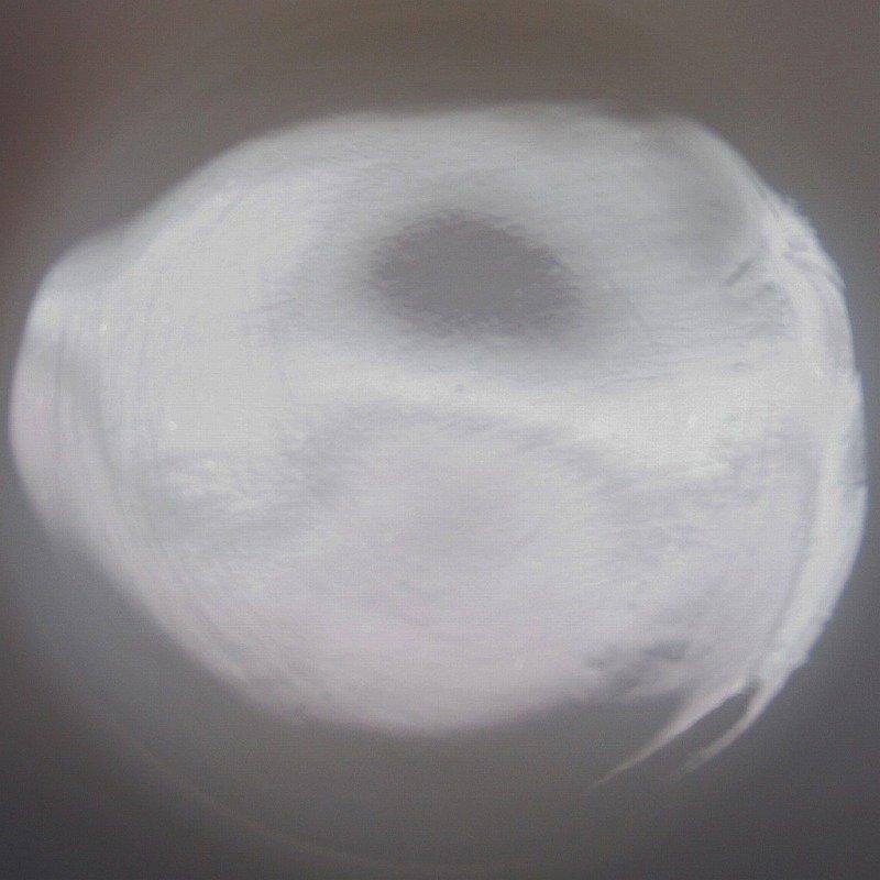 ファイヤーキング  バタフライマグ A【画像9】