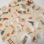 紙モノアソート 1950年代〜 子供単語学習用 イラストセット G