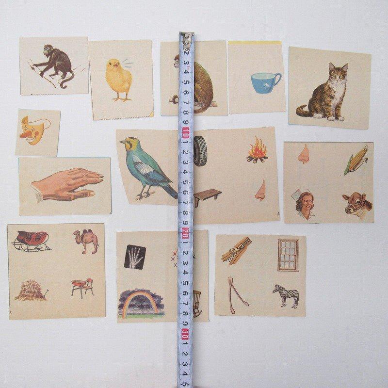 紙モノアソート 1950年代〜 子供単語学習用 イラストセット H【画像5】